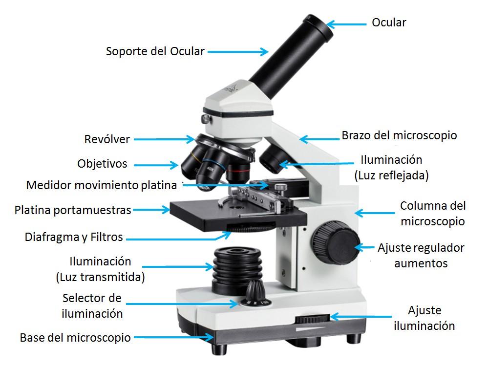 Partes microscopio compuesto