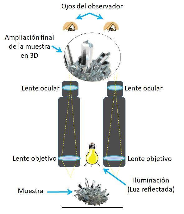 Funcionamiento microscopios estereoscópicos